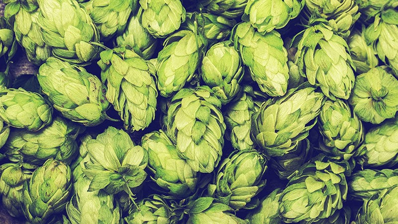 The Complete List of All Hop Varieties on Earth