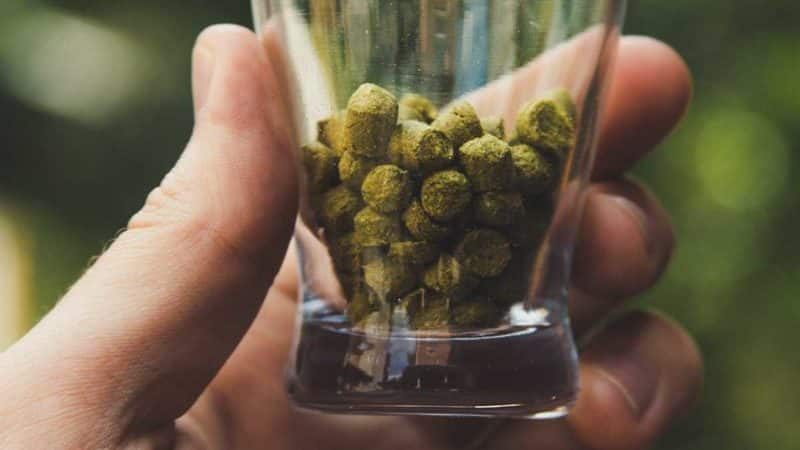 Dry Hopping Your Beer Like a Pro